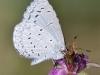 Butterfly_Azure