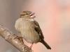 New York City Birds